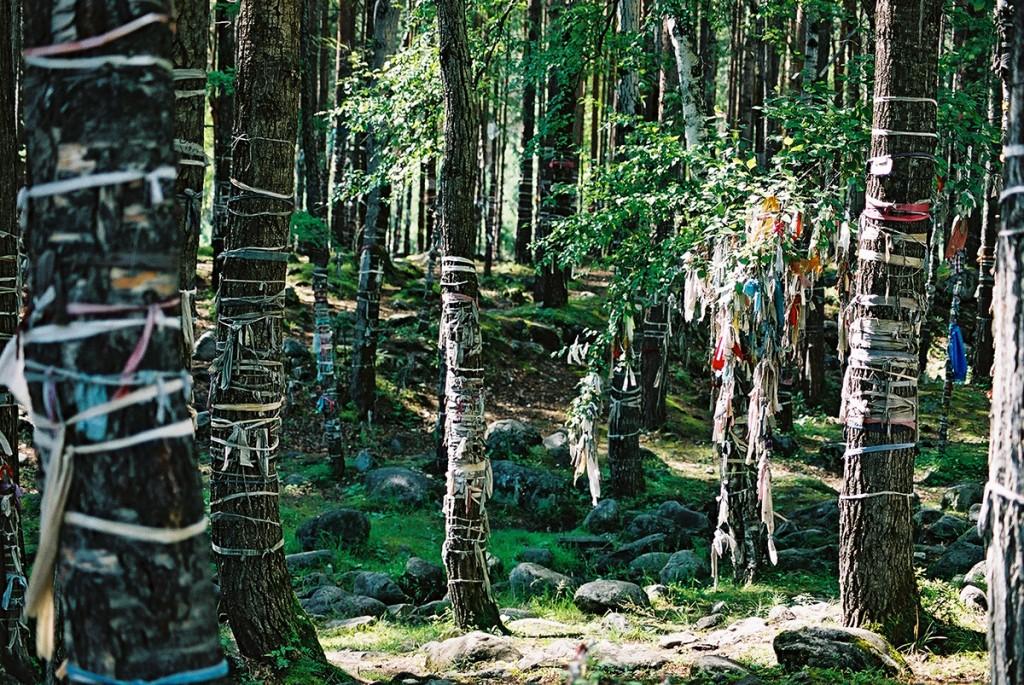 Drzewa w rejonie Przybajkala wystrojone przez wyznawców szamanizmu