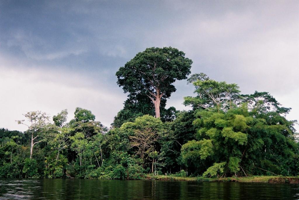 Drzewa dziwnie nie uginały się od małp, ani nawet od krzyczących papug