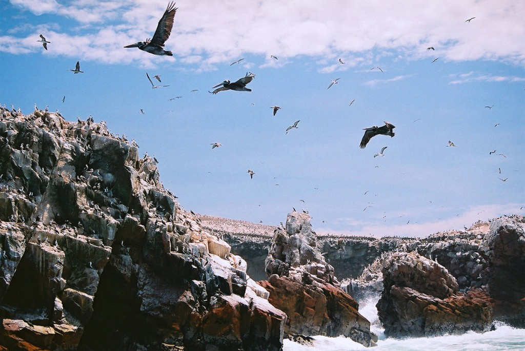 Rezerwat Paracas