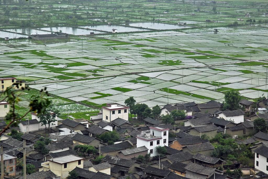 Tysiące poletek ryżowych zalanych wodą