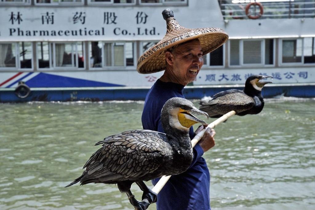 Pozują rybacy i kormorany