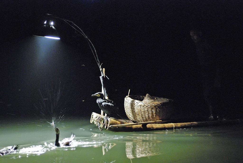Nocny połów z kormoranami